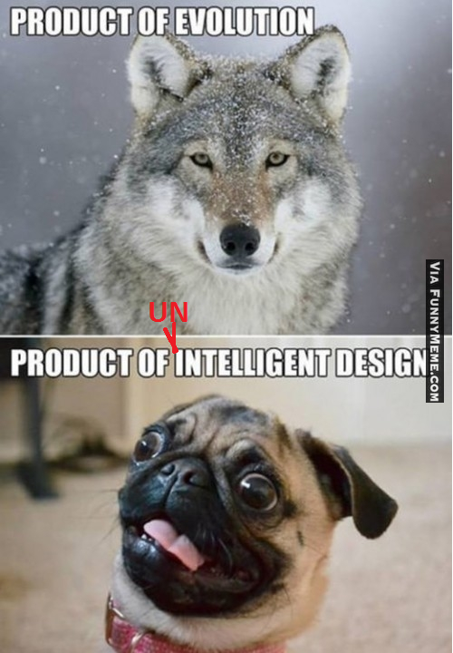 UNintelligent Desigon.png